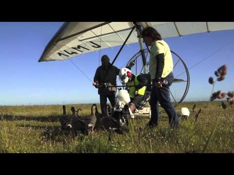 Video: Fliegen mit den Gänsen