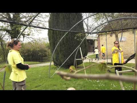 Neues Video: Vögel in Le Bois aux Daims
