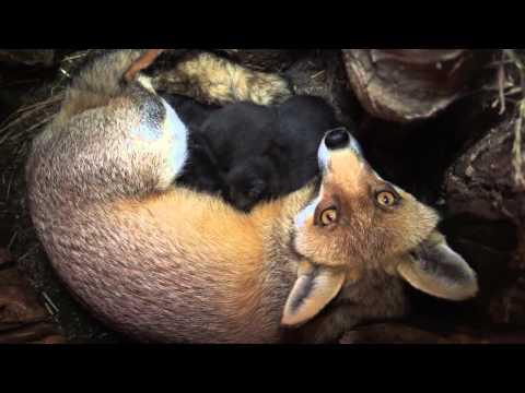 So niedlich: Fuchswelpen im neuen Park