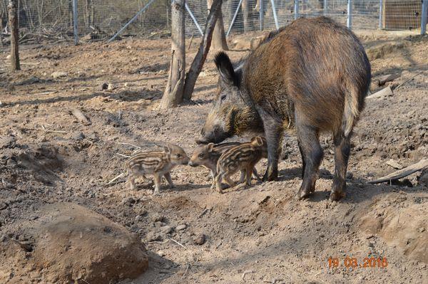 Les nouveau-nés du Bois aux Daims