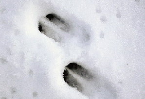 animaux dans la neige