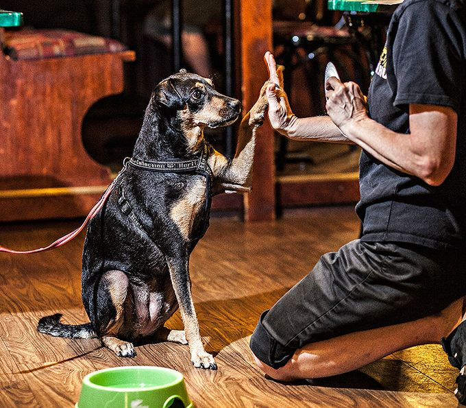 koira ravintola