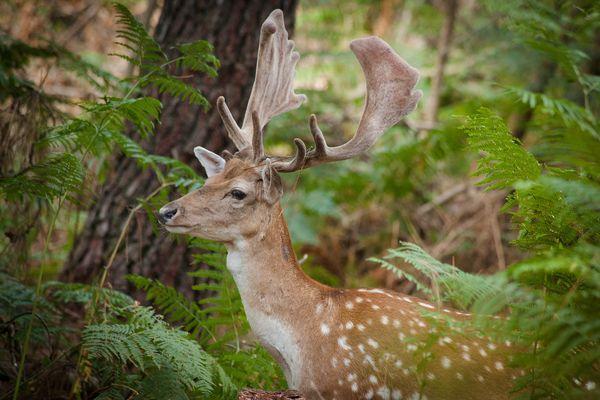 Natuurgeheimen: opgedofte dieren