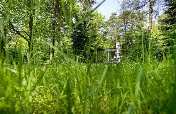 Natuurgeheimen: groen gras