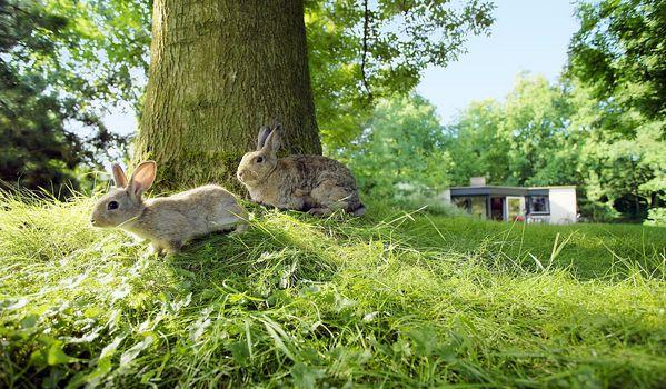 Natuurgeheimen: konijnen kindjes