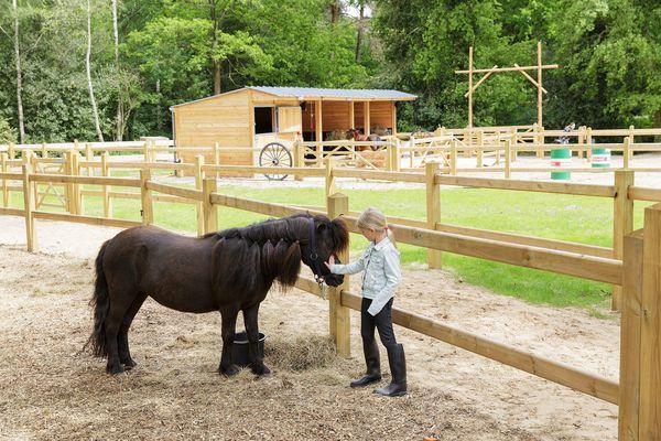 Natuurgeheimen: een pasgeboren pony