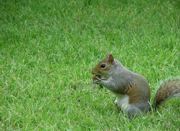 Natuurgeheimen: lange eekhoorntanden