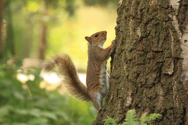 Natuurgeheimen: mama en papa eekhoorn