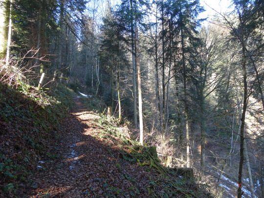 Ein schmaler Waldweg führt uns zuerst nach Ober Rainsberg.