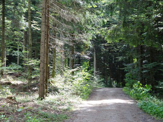 Die kleine Wanderung führt zum Teil auch über angenehme Waldwege.