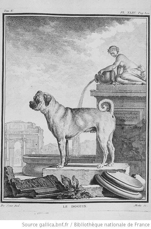 Puukaiverrus vuodelta 1755: Le Doguin (Buffon). Kuva: Wikimedia Commons