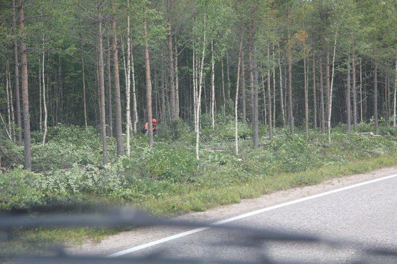 Metsuri raivaa, eli kaataa ja karsii näkyvyyttä tien molemmin puolin.