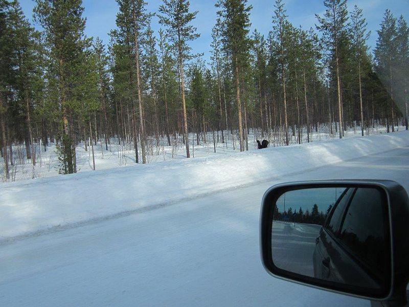...mutta kääntyikin pohjoisen kautta länteen oikeaan suuntaan, Suomeen.