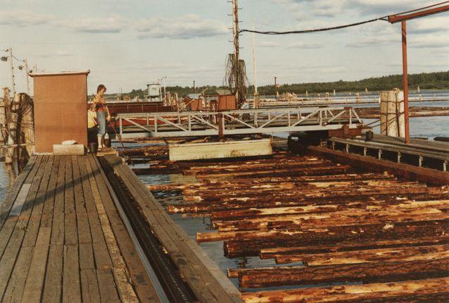 Kemijokisuun erottelua tukkiveräjällä 1982. Kuva: Hanna Snellmanin kotiarkisto.