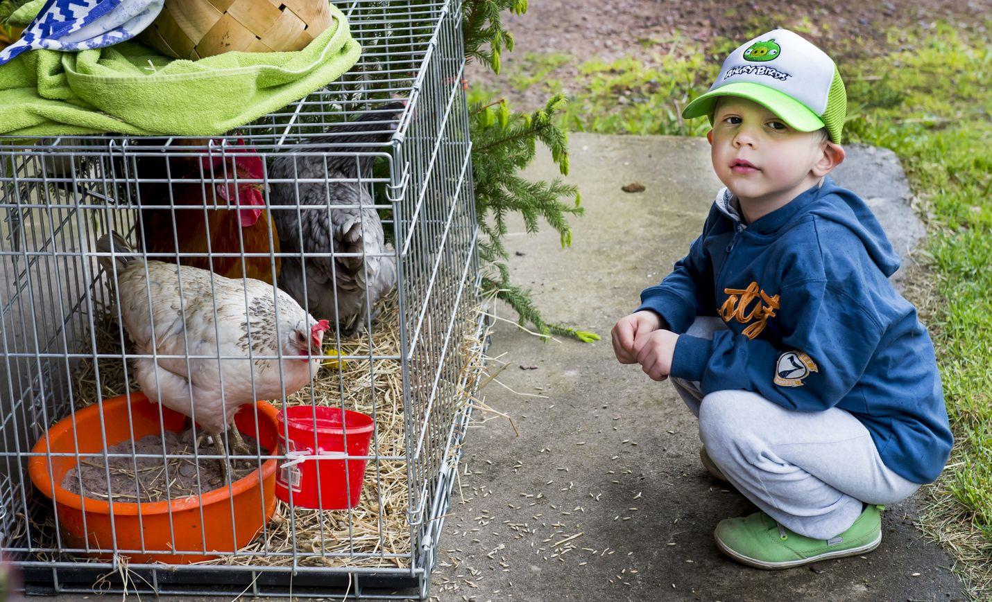 Niklas Raumalta oli tullut paikalle Eurassa asuvan mummunsa kanssa. Niklasta ihastuttivat tilalta löytyvät kotieläimet. Kuva: Esa Urhonen
