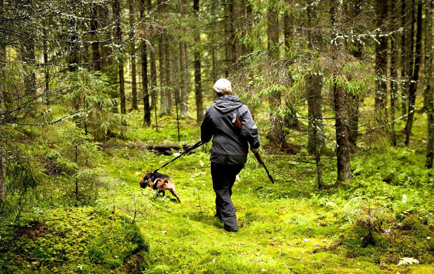 Metsästäjien määrässä ei viime vuosina ole tapahtunut suuria muutoksia. Pienriistaa ja hirvieläimiä jahtasi noin 209 000 metsästäjää vuonna 2014.