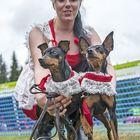 Henna Pöystin koirilla on pitsiä myös nimessä. Kääpiöpinsereiden nimet ovat nimittäin Pitsi ja Penni.