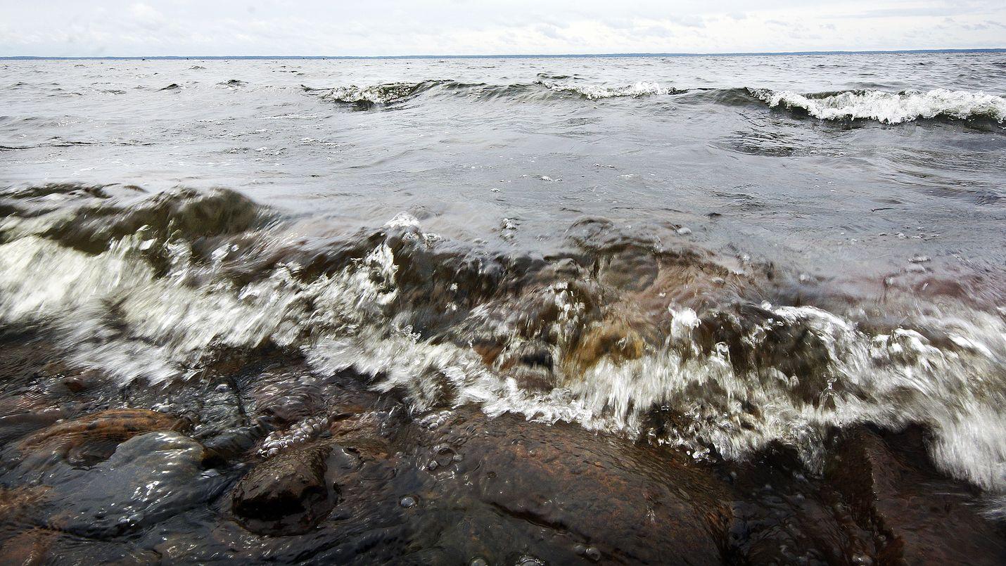 Satakuntaliitto haastaa jakamaan vetisiä äänihavaintoja. Kuva: LS-arkisto/Jami Jokinen