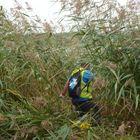 Työtoverit etsivät kadonnutta miestä Äyhönjärven ympäristöstä kaislikkoa myöten. Kuva: Saana Jaakkola