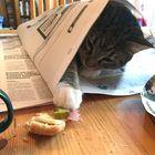 Lehti kuuluu oleellisena osana aamiaisrutiineihin. Tällä kerralla vain Iiro-kissa keksi, että lehti on erinomainen suoja, jos mielii napata oman osuutensa aamiaisleivän päällä olevista kinkusta ja juustosta. Kuva: Kai Salonen