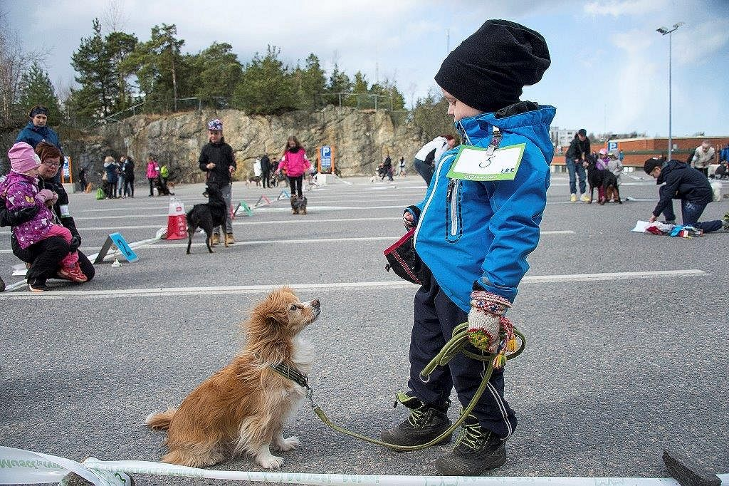 Ressu-koira tietää, että Lukan taskusta löytyy herkkuja. Luka koirineen esiintyi Match Showssa Raumalla sunnuntaina. Kuva: Pekka Lehmuskallio