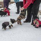Lila Gunnarin pihalla Kortelassa aloitettiin säännölliset pikkukoiratapaamiset. Kuva: Pekka Lehmuskallio