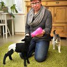 Hanna-Leena Juhola pääsi juottamaan ahvenanmaanlampaan Mainio-karitsaa, sillä sille ei riittänyt tarpeeksi emän maitoa. Kuva: Juha Sinisalo