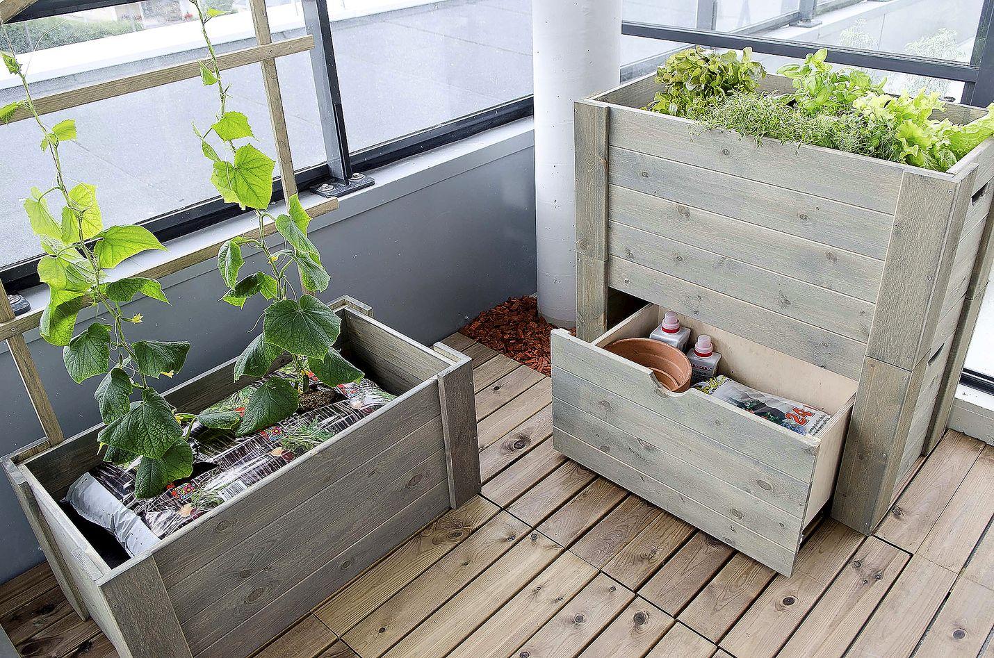 Kasvatuslaatikko