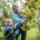 Marjo Mäkirinne ja Eikka Putro ovat ensimmäistä kertaa pähkinöitä poimimassa. Kuva: Pekka Lehmuskallio
