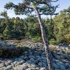 Maanpään alueen keskiosan kalliot muuttuvat teollisuuskäyttöön varatuksi alueeksi Rauman kaupunginvaltuuston päätöksellä. Rakentamaton rantavyöhyke osoitetaan virkistysalueeksi. Kuva: Esa Urhonen