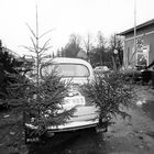 Joulun alla tämä kuusienkuljetuskuva sai Instagram-seuraajat tykkäämään.