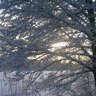 Näistä lumisista maisemista ei saa tarpeekseen, kertoo tämän kuvan ottaja LS Luonto-ryhmässä. Kuva: Lenita Lehto