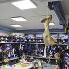 KeuPan pukuhuoneessa roikkuva naudan reisiluu muistuttaa joukkueen arvoista. Kuva: Eetu Setänen