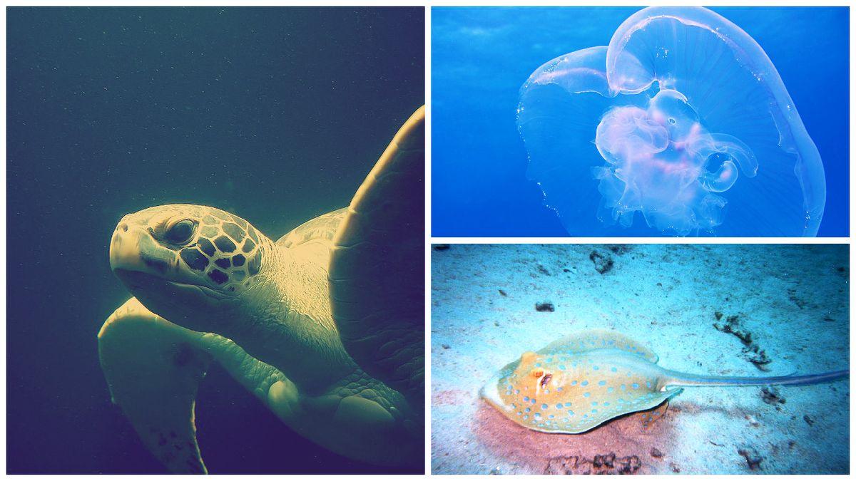 La faune aquatique