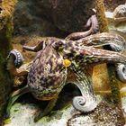 Grand Aquarium de Saint - Malo © Nemodus photos -  Flickr