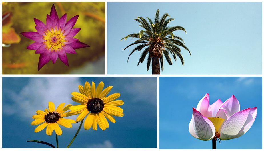 La beauté est la fleur du bonheur