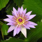 jardin des plantes Caen ©Laurent Revellin - Flickr