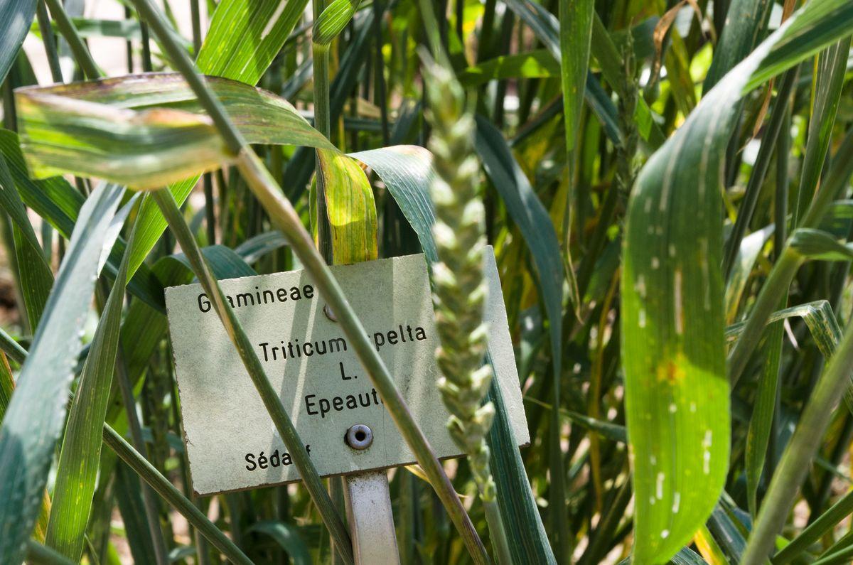 Escapade au jardin des plantes de Caen - Evasionmer