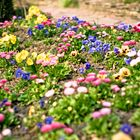 jardin des plantes Caen3© Gaëtan Zarforoushan - Flickr