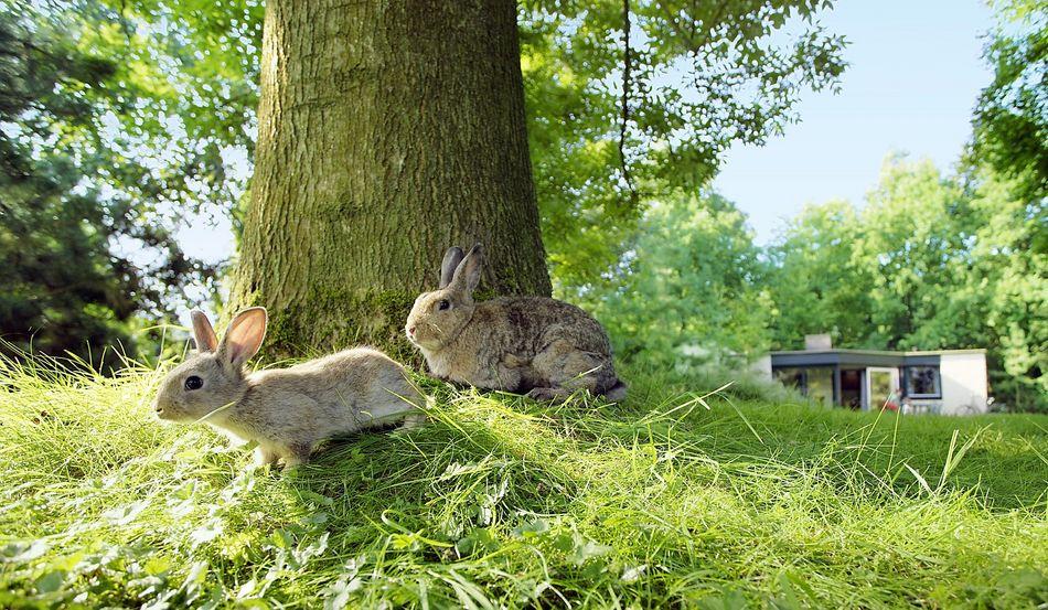 Terrassengäste sind tierische Besucher auf der Terrasse Ihres Center Parcs-Ferienhauses