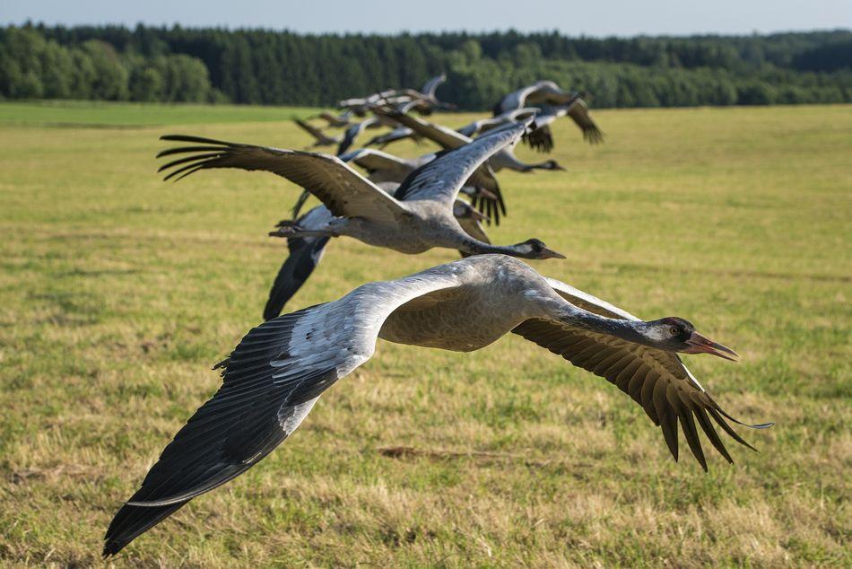 7. Zugvogeltage bei Park Nordseeküste