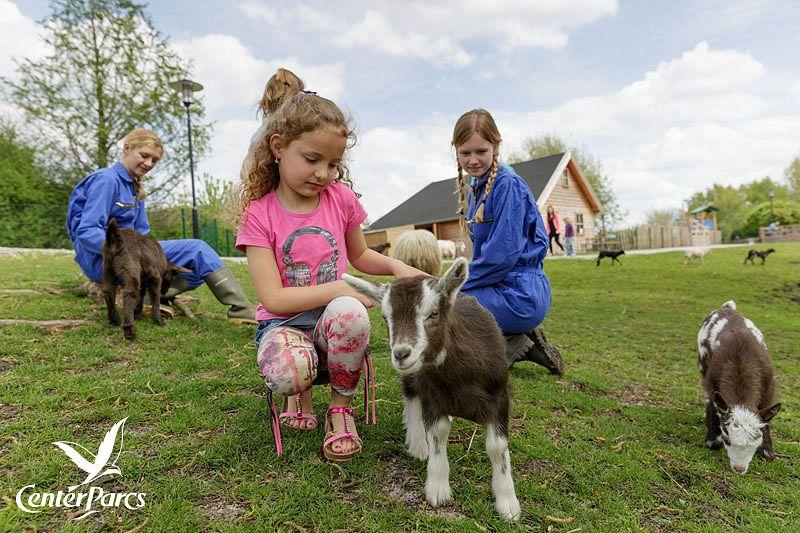 Zicklein im Kinderbauernhof bei Center Parcs