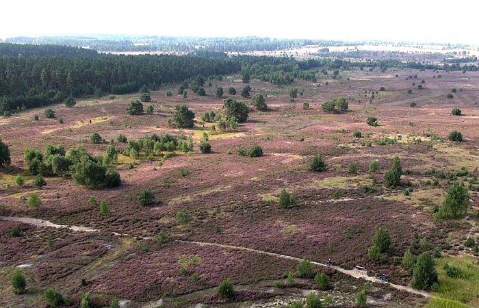 Die Lüneburger Heide in der Nähe von Center Parcs Bispinger Heide