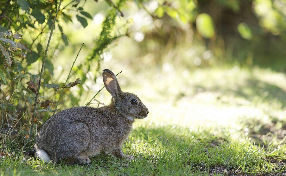 7 Fakten über (Oster-)Hasen