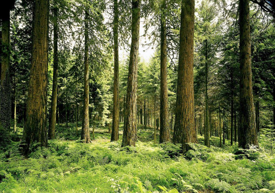 Der Erhalt einer intakten Natur ist für Center Parcs oberstes Gebot.