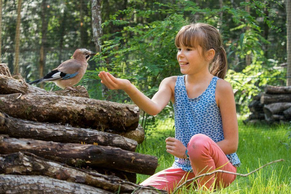 Vögel bereiten im Frühling bei Center Parcs ihren Nestbau vor