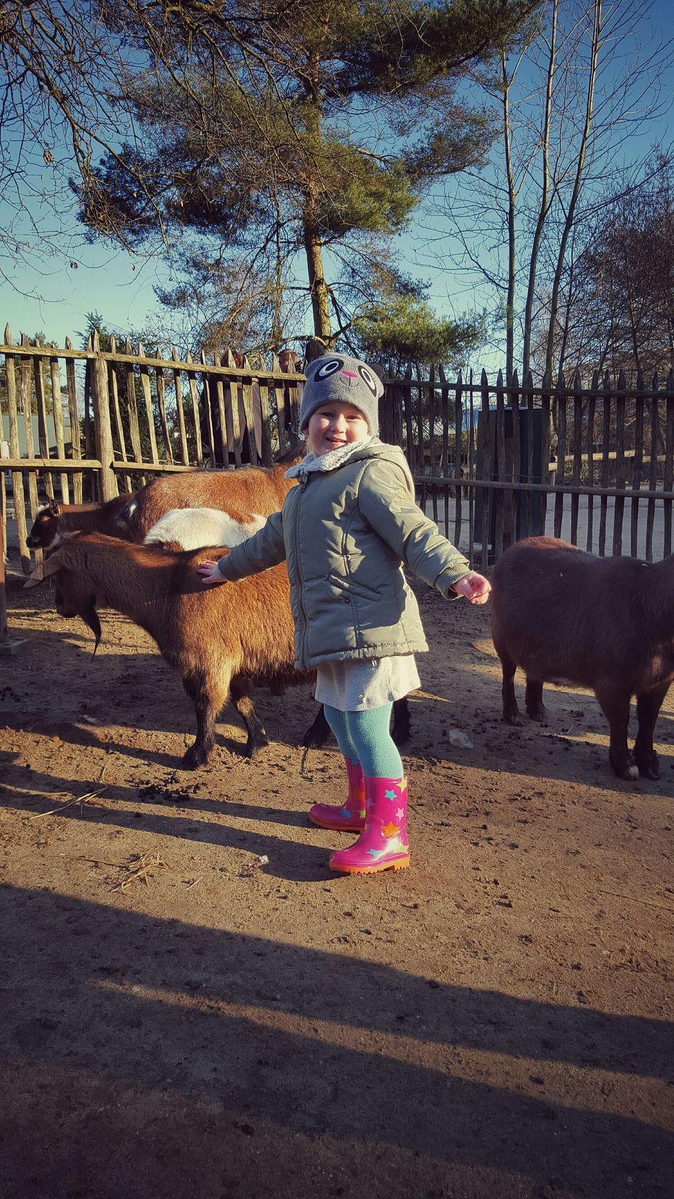 Tanzen und Knuffeln mit den Ziegen
