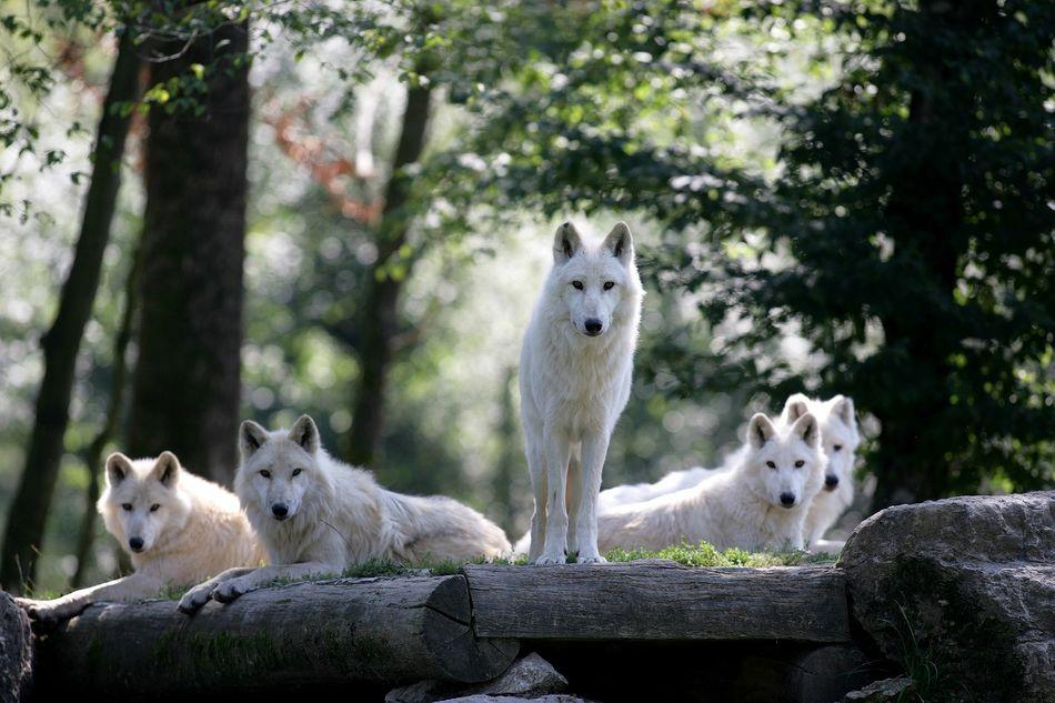 Der Tierpark Sainte-Croix liegt ganz in der Nahe von Les Trois Forêts