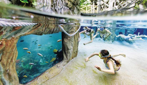 Fische im Schnorchelbecken des Aqua Mundo