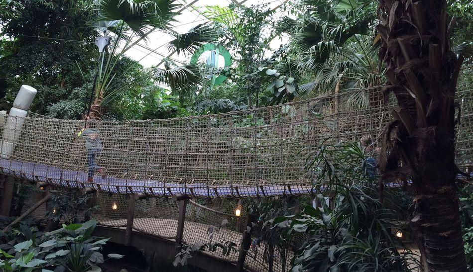 Wannabe ein Park-Ranger: Ein Dschungel-Abenteuer für Kinder ab 4 Jahren!